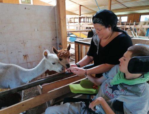 Mit Tieren arbeiten
